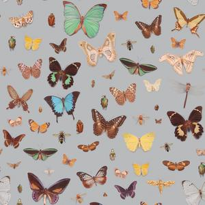 Bugs and Butterflies image