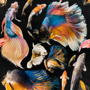 Goldfish - Anthracite image